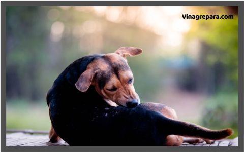 remedios para picor de perros