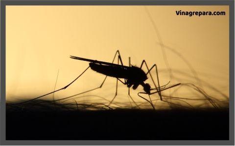 repelente mosquitos casero vinagre