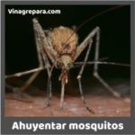 vinagre para ahuyentar mosquitos