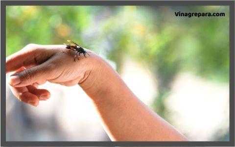 uso del vinagre para picaduras de insectos