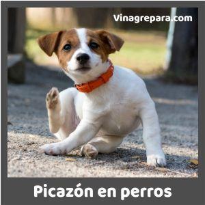 vinagre para picazon en perros