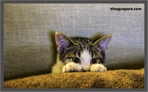 ahuyentar gatos que orinan con vinagre