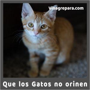 vinagre para que los gatos no orinen