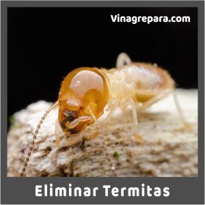 vinagre para termitas